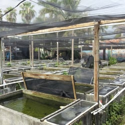 Neighborhood fish farm miami fl yelp for Fish farms in florida