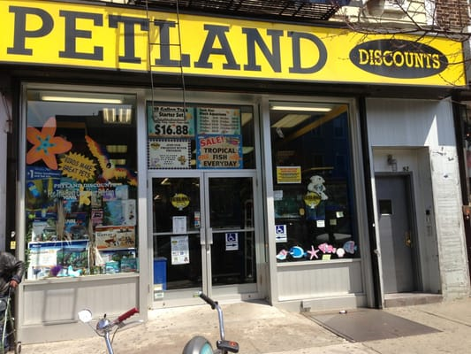 petland discounts   east williamsburg   brooklyn ny