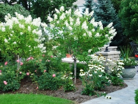 Long blooming trees shrubs and perennials provide color and privacy for this patio in - Shrubbery for privacy ...