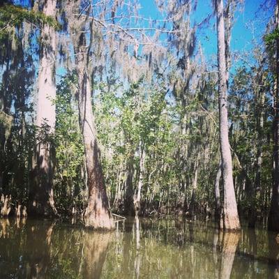 Honey Island Swamp Tour Yelp