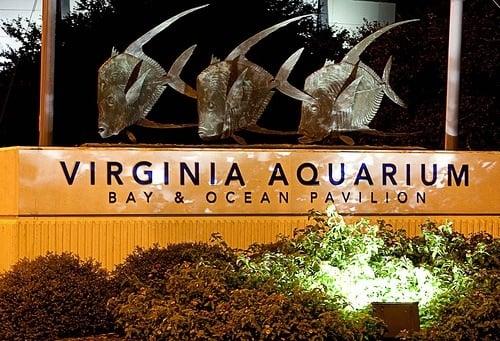 Photos For The Virginia Aquarium Marine Science Center