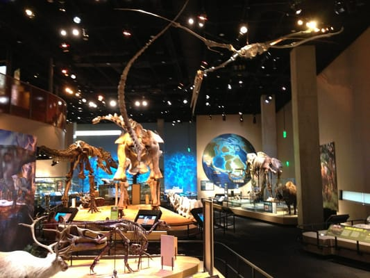 Museum Of Nature And Science Imax Dallas