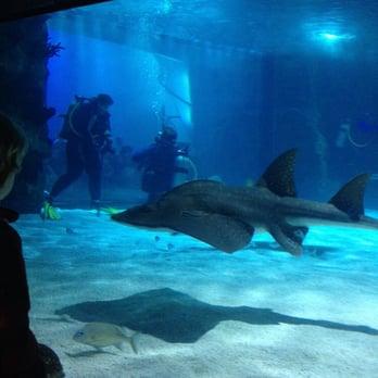 Newport Aquarium Aquariums Newport Ky Yelp