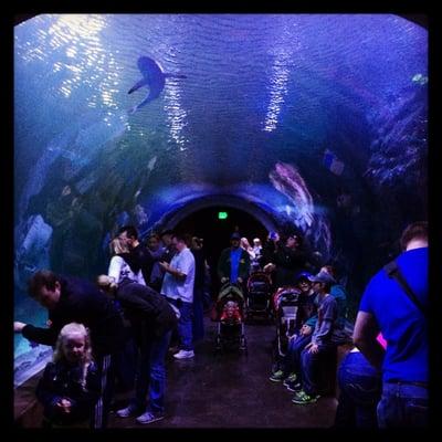 Loveland Living Planet Aquarium - Aquariums - Draper ...