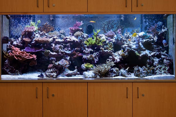 Saltwater aquarium store near me aquarium store for Fish aquarium stores near me