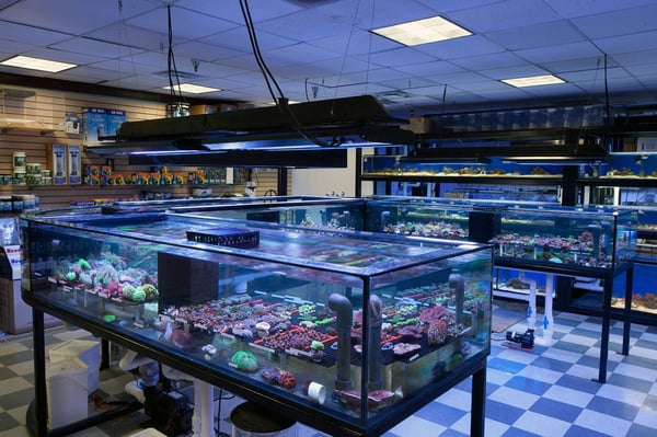 Aquarium store los angeles reptiles store in canoga park for Fish store san francisco