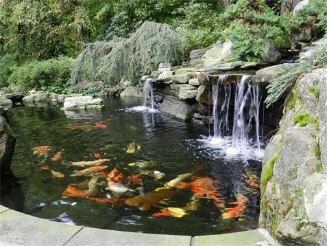 Large koi pond vienna va yelp for Large koi pool