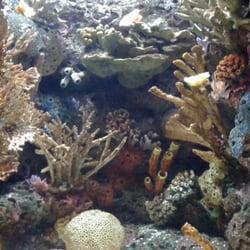 The Florida Aquarium Tampa Fl