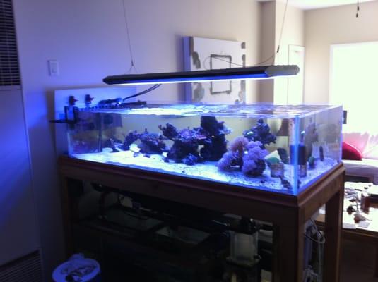 Saltwater fish tank near me 300gal saltwater fish tank for Fish tank cleaning service near me