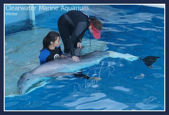 Clearwater Marine Aquarium Aquarium Clearwater Beach