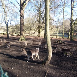 Private deer park at Bentley Priory Nature Reserve