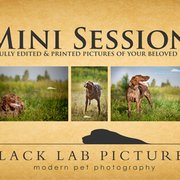 Black Lab Pictures, London