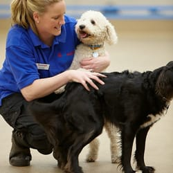 Mypetstop: Petboarding & Care Centre, Washington, Tyne and Wear