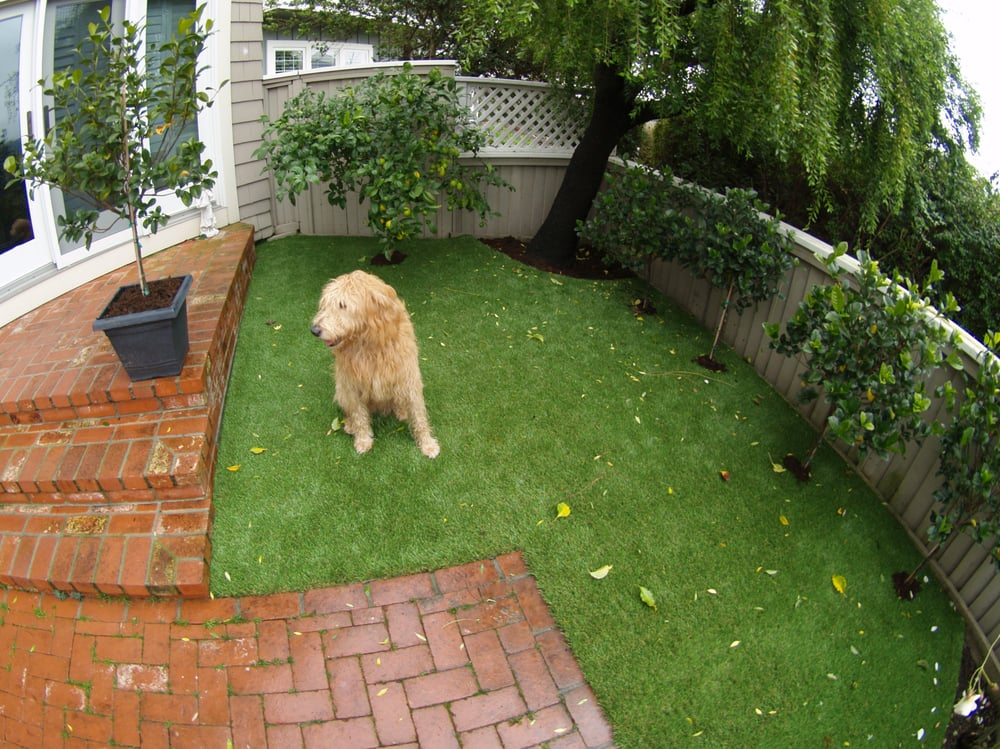 Turf Backyard Dogs : Artificial turf for a dog run area installed in a backyard in the