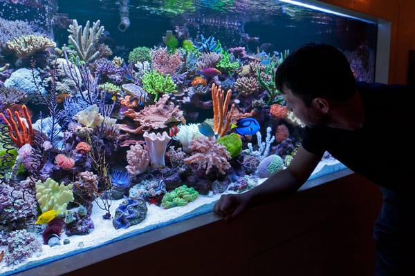 Vivid aquarium maintains and stocks this 400 gallon reef for 800 gallon fish tank