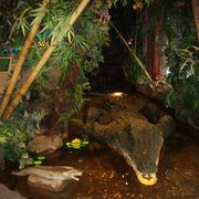 The Rainforest Cafe, London