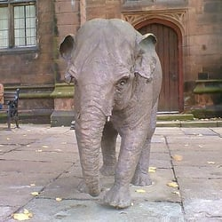 Elephant, Chester, Cheshire East