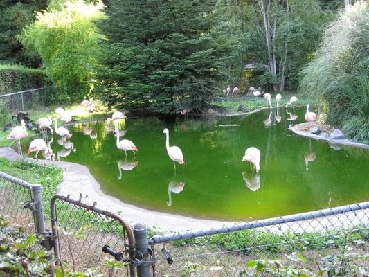 ordsprog på engelsk Odense Zoo