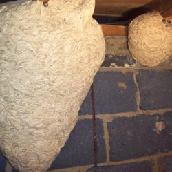 Wasp Nest Removal in Croydon