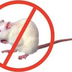 Pest Control Cheshunt, Waltham Cross, Hertfordshire, UK