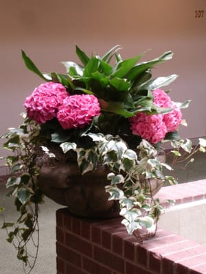 Colorful indoor plants bring life and beauty to your interior call us for a complementary - Colorful indoor plants ...