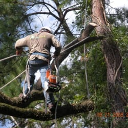 Embark Tree And Landscape Services L.P. - Spring Branch - Houston TX - Yelp
