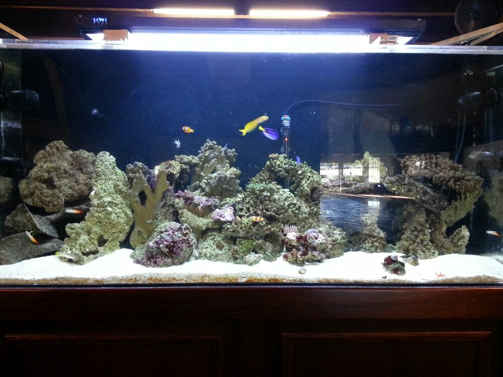 Beautiful Fish Tank Yelp