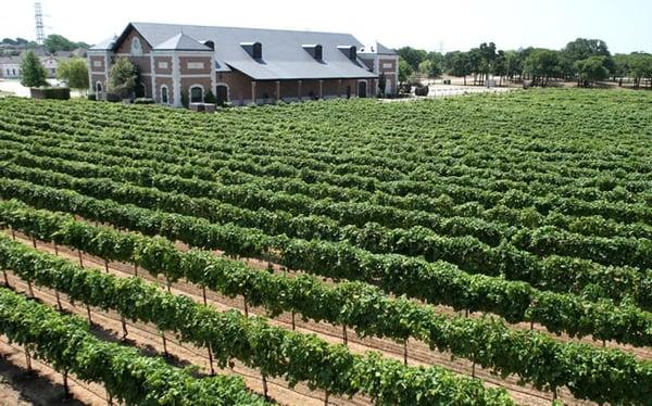 Delaney Vineyards Wineries