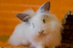 Adopt Pez the bunny!